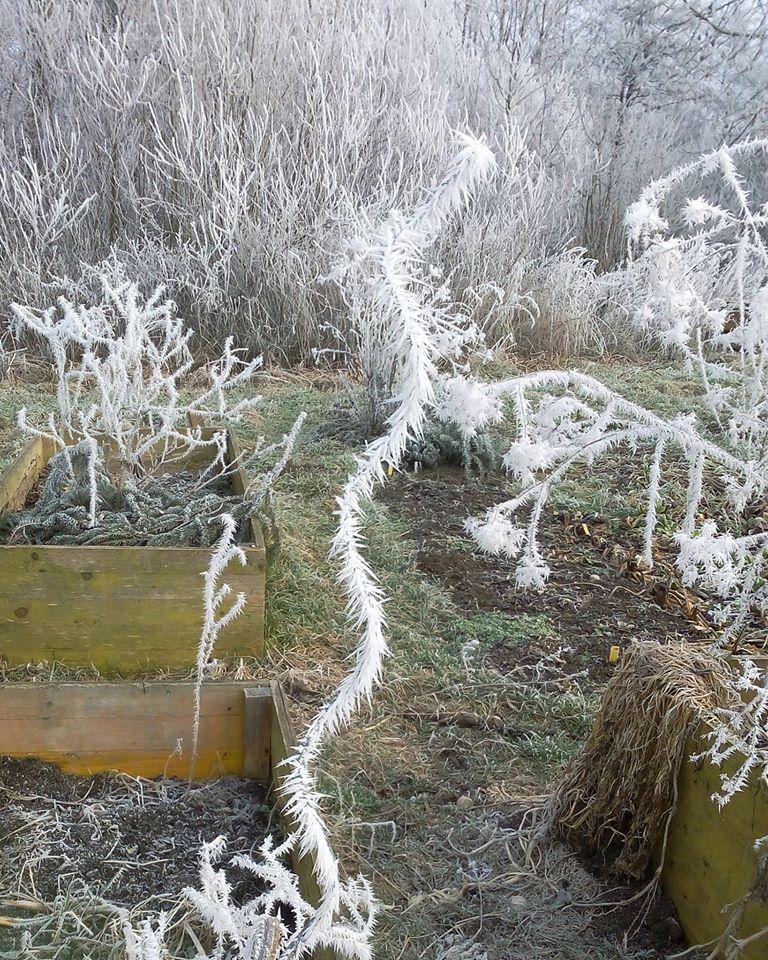 Garten Im Winter der garten im winter knollen co e v