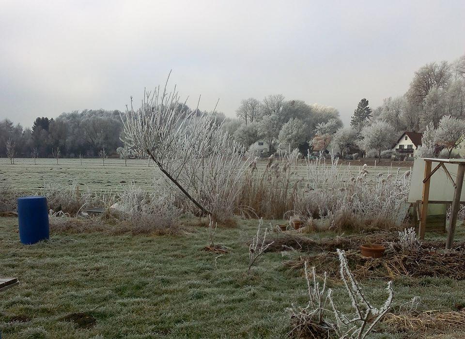 Der Garten Im Winter Knollen Co Ev